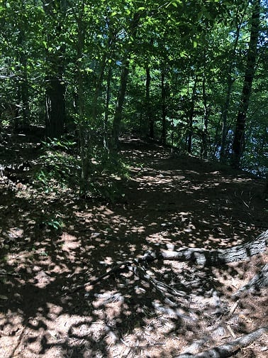 Wooded unpaved trail at Betty's Neck in Lakeville