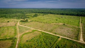 A drone photo of former bogs in Mattapoisett.